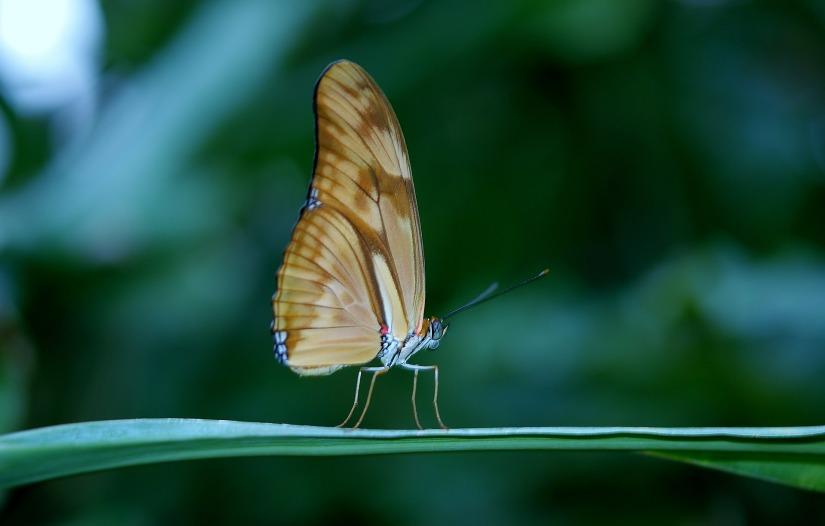 butterfly-23063_1920