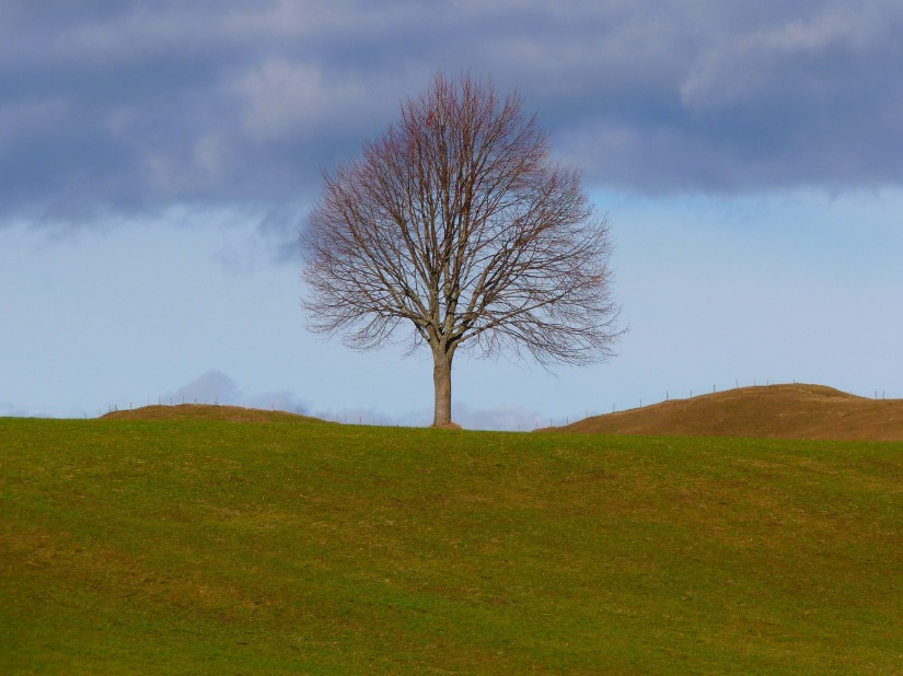 tree-4700_1920