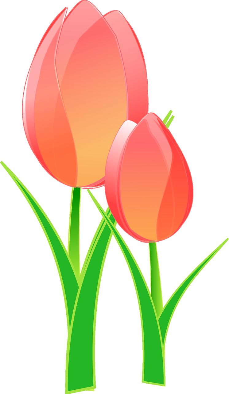 tulips-152832_1280